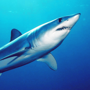 Sharks have privacy rights too?